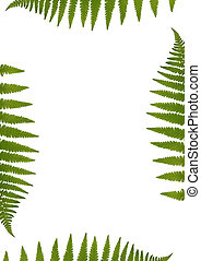 Fern Leaf Border - Green fern leaf border over white...