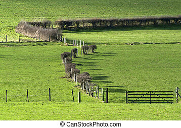 fields and hedgerow - green fields with hedges, gate and...