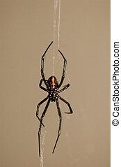 Black Widow - Spider, black widow