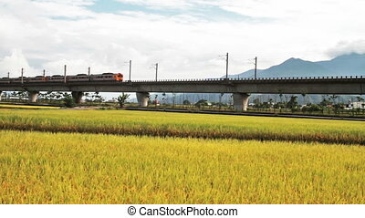 Paddy field in the morning for adv or others purpose use