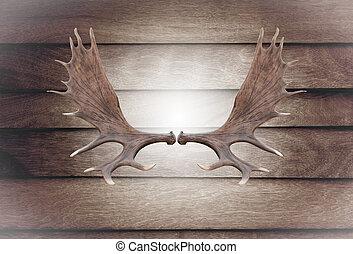 Närbild, horn, Moose, Trä, vägg