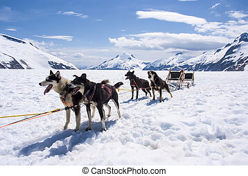 Alaska - Dog Sledding - Travel Destination