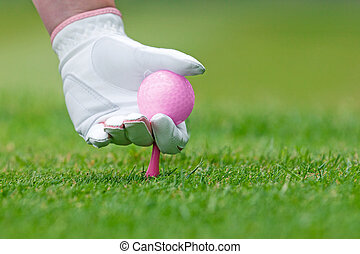 Ladies golf hand placing pink tee and ball into ground. - A...