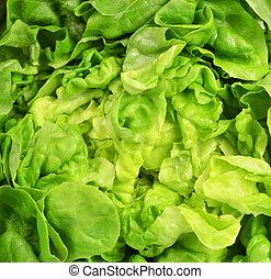 Fresh lettuce background