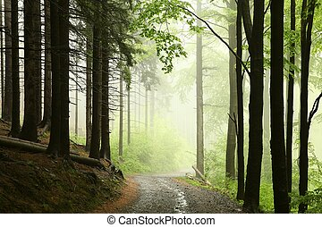 Majestic spring forest - Path on a foggy morning in spring...