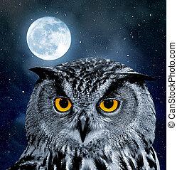 Eagle Owl, Bubo bubo in the night
