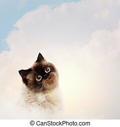 Funny fluffy cat against color background Collage