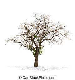Dry dead tree isolated on white .