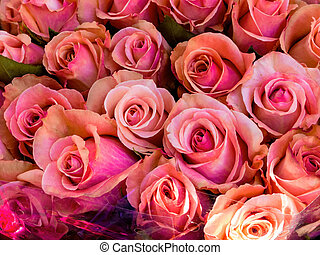 pink roses, background - many pink roses on a flower market...