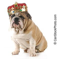 dog wearing crown - english bulldog wearing king's crown...