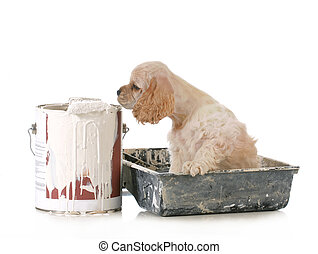 puppy with paint