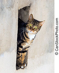 cat in a wall opening - a little cat looks curiously out of...