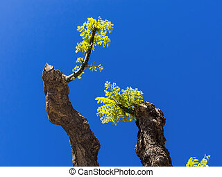 young shoot of a pruned tree. against a blue sky