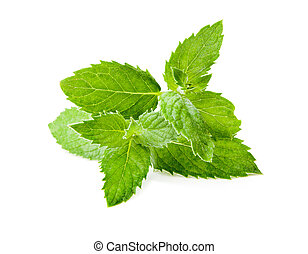 Leaf spearmint on white background - Leaf spearmint on white...