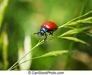 Red bug on a blade of grass