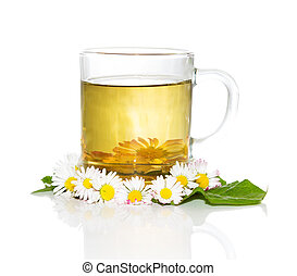 Fresh herbal tea with Bellis prennis - Fresh herbal tea or...