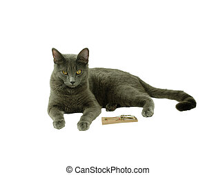 Patience kitty - Mouse trap used to catch small rodents,...