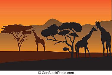 Giraffes - vector African landscape with giraffes