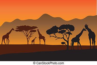 giraffes - vector landscape with giraffes