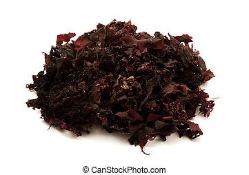 Atlantic dulse on a white background