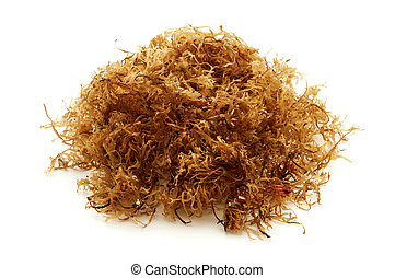 Carrageen moss on a white background