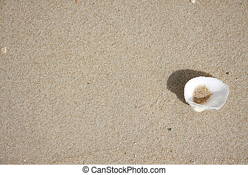 clam shell on sand