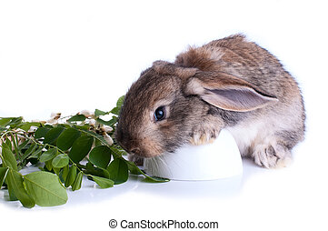 Illustrtion of a bunny sitting on a stump with green leaves...