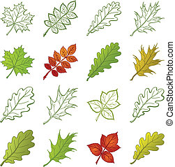 Leaves of plants and pictograms, set