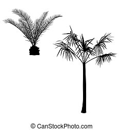 illustration with palm silhouettes - Illustration with palm...