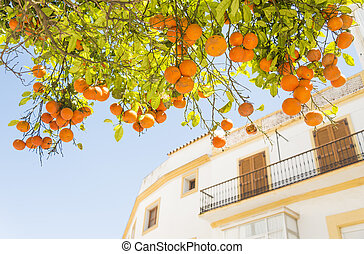orange tree - An orange fruit tree with a building in the...