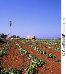 Irrigation ang growth - The red soil of a field in Cyprus...