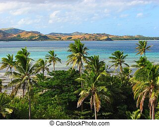 Tropical palms in Nacula island, Yasawa Islands, Fiji -...