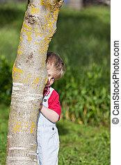 Menino, jarda, árvore, atrás de, tronco, escondendo