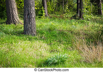 Forest clearing - A grass clearing in a beautiful forest