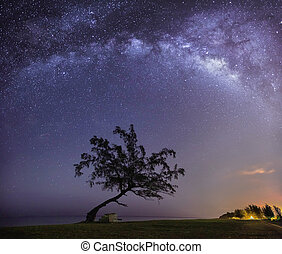 Milky way under lonely tree