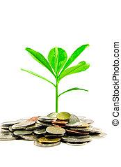 Leaves grow in between coins