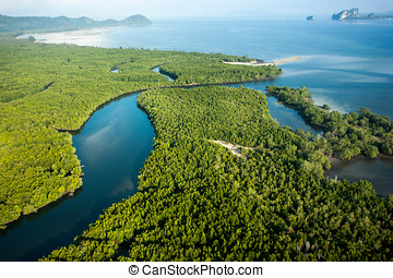 Aerial view of mangrove forest and river - Aerial view of...