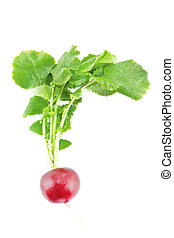 red radish - Small garden red radish  on white background