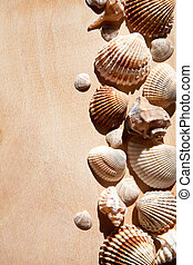 sea shells and star closeup on wooden background