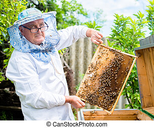 Beekeeper holding a frame of honey