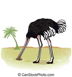 Ostrich hides its head in the sand