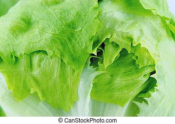 Green Iceberg lettuce - Fresh Green Iceberg lettuce .