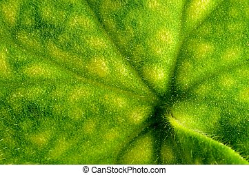 Green Leaf Background - a macrophoto of a leaf of a geranium...