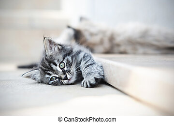 kittens are funny - cute cats suffering from the heat, and...