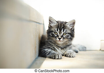 kitten relax - a kitten is resting in the shade after...