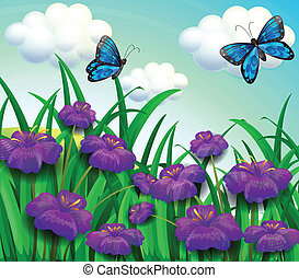 Two blue butterflies at the garden with violet flowers -...