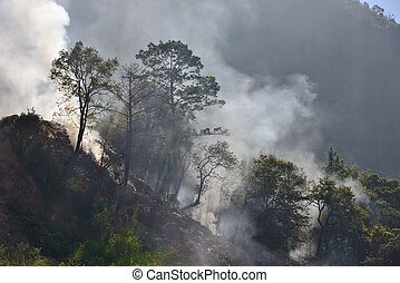 Burning debris on the slopes of the mountains in the jungles of Central America.