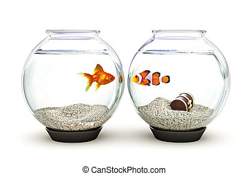 Opposites Attract - goldfish and clown fish showing...