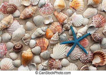 Sea shells and starfish on sand