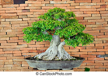 Bonsai can be created from nearly any perennial...